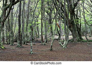 Ushuaia, Argentine, vert, forêt
