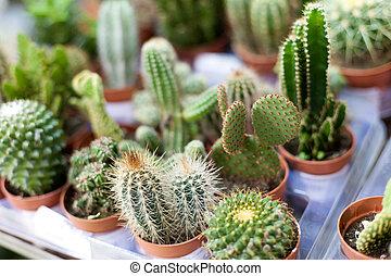 usine cactus, ensemble