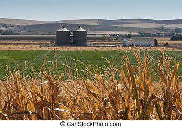 usine, maïs, traitement, plantation, plante