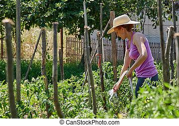usines, arrosage, dame, jardinier