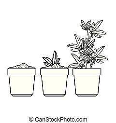 usines, cannabis, pots, groupe
