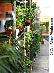 usines, centre, jardin