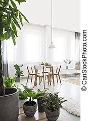 usines, dans, clair, salle manger, intérieur, à, blanc, chaises, à, table bois, sous, lamp., vrai, photo