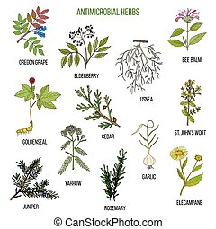usines, ensemble, main, herbs., antimicrobial, dessiné, ...