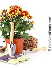 usines, equipments, fleurs, jardin, roses