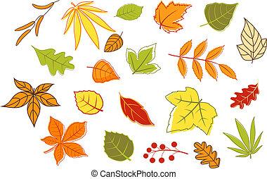 usines, feuilles, automnal, coloré