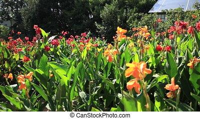 usines, fleur, flowers., coloré, fleurir, wih, lit, petals.,...