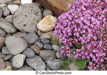 usines, fleurs pourpres, -, islande