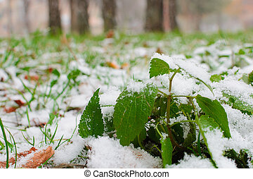 usines, herbe, branches, nature., sous, neige, snow., automne, park., vert, détails, tiges, couvert, premier