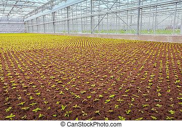 usines, industriel, croissance, jardin