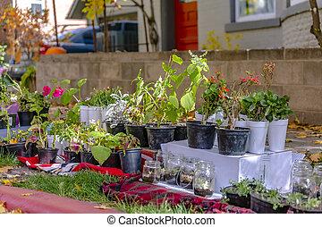 usines, jardin, variété, luxuriant, maison, potted fleurit