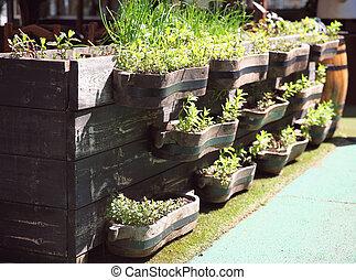 usines, jardinage, concept, décoratif, bois, -, décoration, boîtes, rue, vert, seedlings