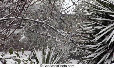 usines, neige, arbres