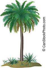 usines, palmier