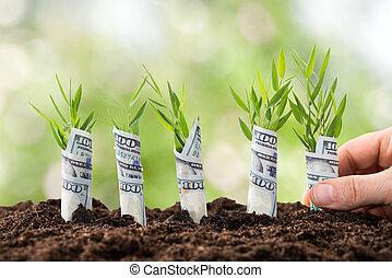 usines, personne, planter, argent
