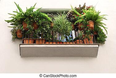usines, pots, vert, espagnol, décoré, balcon