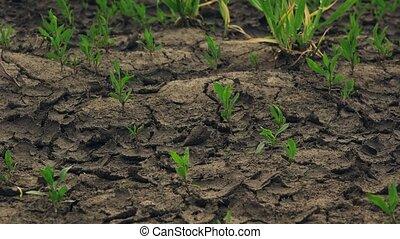 usines, sec, terre, vert, croissant