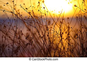 usines, silhouette, coucher soleil, séché, fond, fleurs