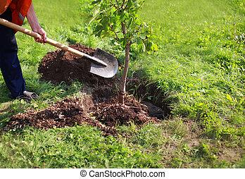 usines, terrestre, concept, nature, creuse, environnement, arbre, pelle, écologie, mains, homme