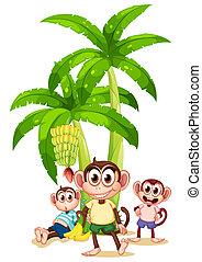 usines, trois, banane, singes