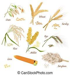 usines, vecteur, blé, icônes, maïs, seigle, millet, avoine, orge, céréale, riz, sorgho, set., illustrations.
