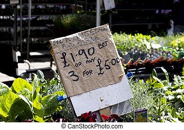 usines, vendre, alpin, herbacé