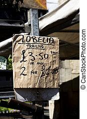 usines, vendre, traîner, lobelia