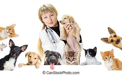 usmívaní, veterán, a, pes, a, kočka