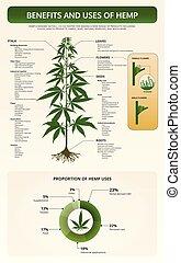 usos, infographic, tetxtbook, benefícios, vertical, cânhamo