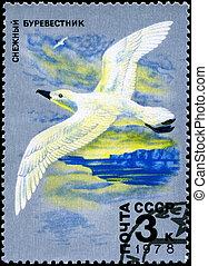 USSR - CIRCA 1978 Whitewinged Petrel