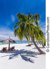 ustrojenie krzesła, drzewa, tropikalny, dłoń plaża