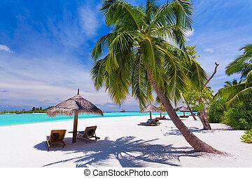ustrojenie krzesła, drzewa, tropikalny, dłoń, pod, plaża