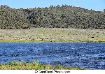 National Forest - Utah forest landscape in the United...