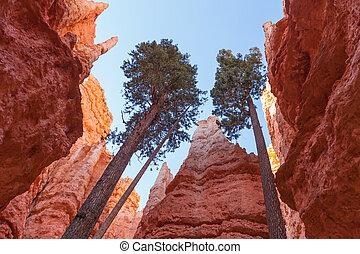 utah, liget, nemzeti, bryce kanyon