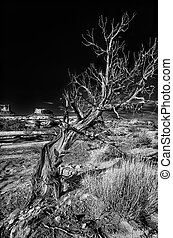 utah, solitaire, arbre, désert