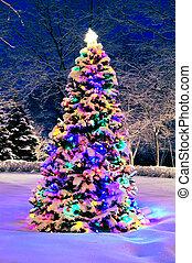 utanför, träd, jul