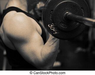 utbildning, styrka, gymnastiksal, barbell