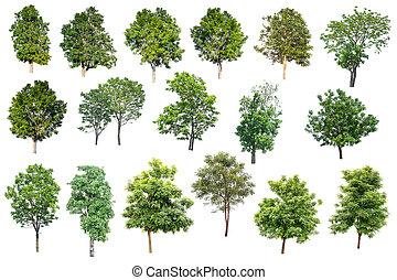utilisé, architecture., isolé, arbres, exotique, fond, collection, blanc, conception, publicité