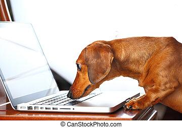 utilisation ordinateur, chien