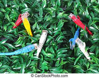 utp, lan, kabel, op, groen gras