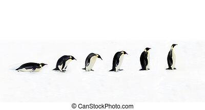 utveckling, pingvin