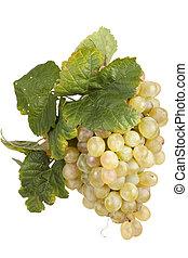 uva blanca, aislado