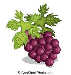 uva, disegno, icona