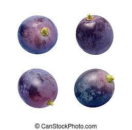 uva passa concorde, isolato, bianco