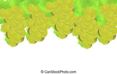 uva, uva blanca