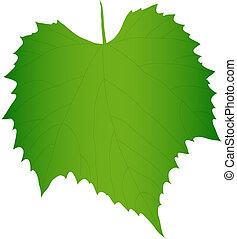 uva verde, hoja