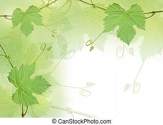 uva verde, hojas, plano de fondo