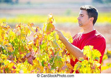 uva, verificar, hojas, mediterráneo, viña, granjero