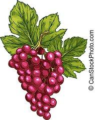 uva vermelha, vetorial, esboço, isolado, fruta, baga