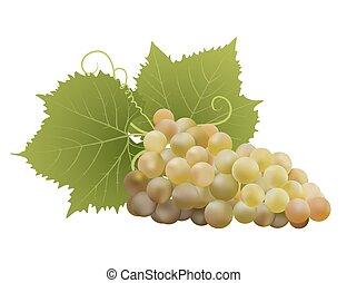 uvas blancas, con, hojas, en, white., vector, ilustración